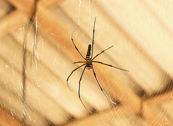 article-housespiders